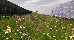solar farm & wildflowers