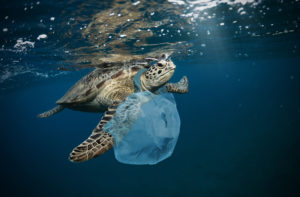 turtle swimming with plastic bag