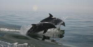 dolphins in bay