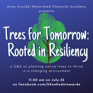 Trees for Tomorrow image