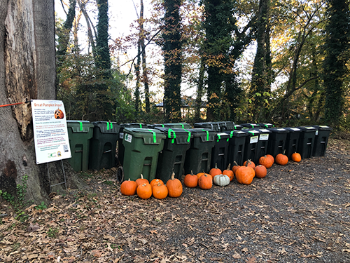 pumpkins & bins at Truxtun Park