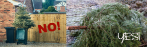 christmas tree in bin and in garden