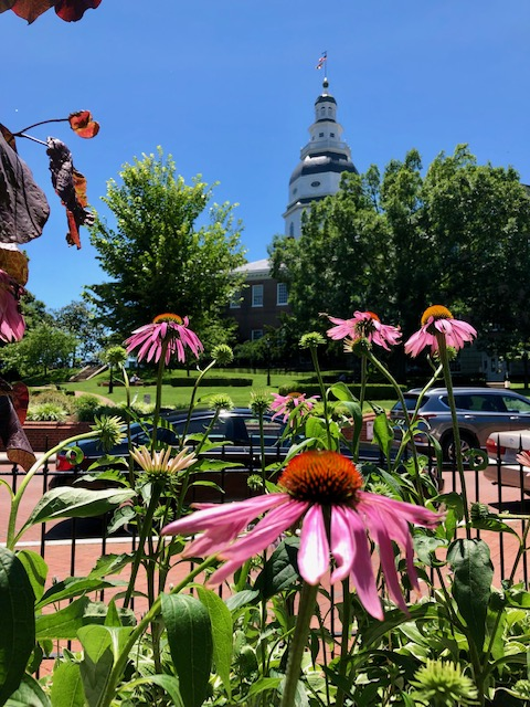 maryland state house view with flowers
