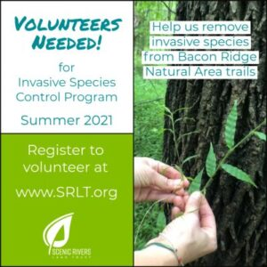 Volunteers needed for invasive special control at Bacon Ridge